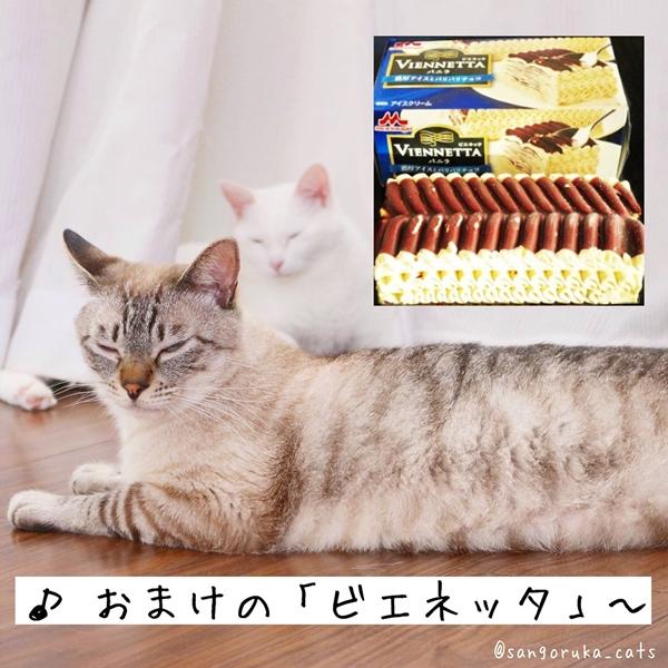 f:id:sangoruka_cats:20180719171732j:plain