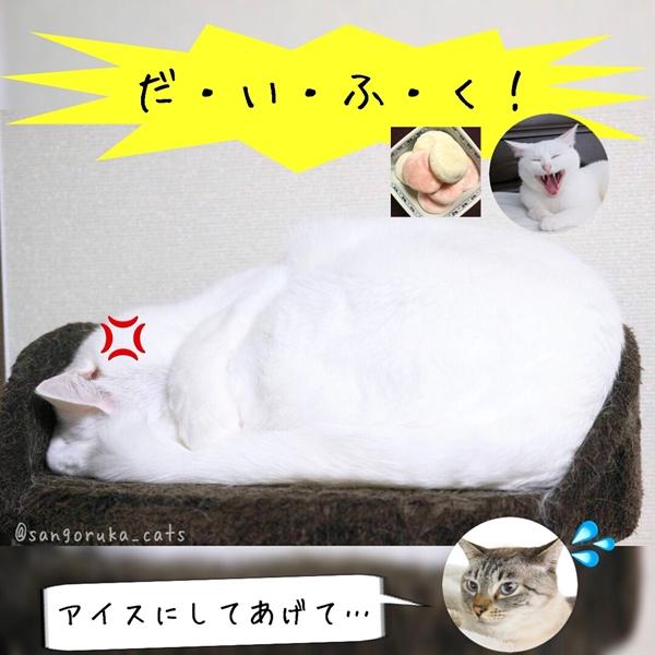 f:id:sangoruka_cats:20180719171733j:plain