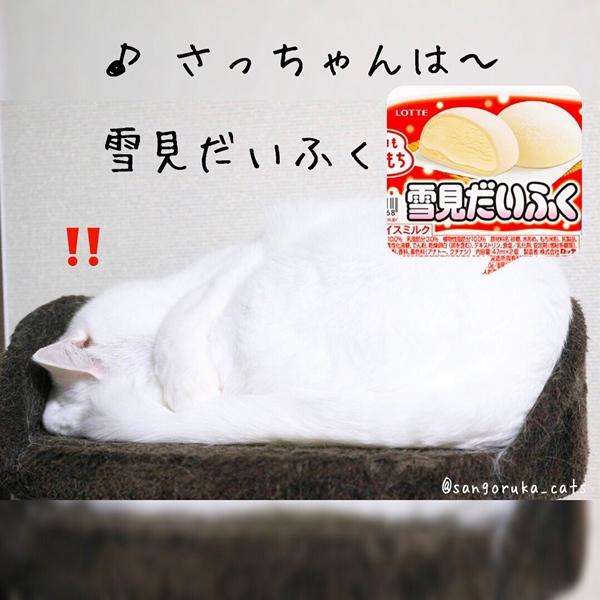 f:id:sangoruka_cats:20180719171734j:plain