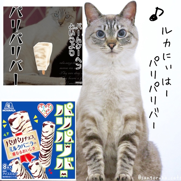 f:id:sangoruka_cats:20180719171735j:plain