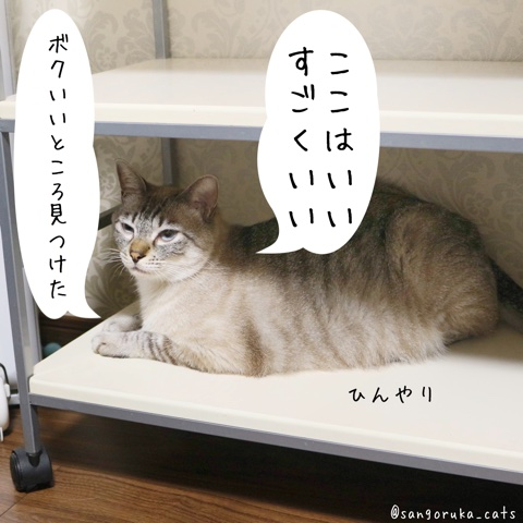 f:id:sangoruka_cats:20180724005638j:plain