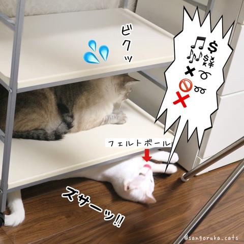 f:id:sangoruka_cats:20180724005639j:plain