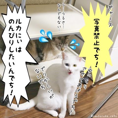 f:id:sangoruka_cats:20180724005641j:plain