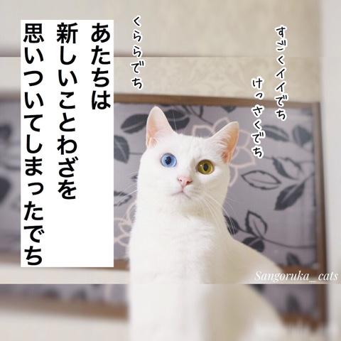 f:id:sangoruka_cats:20180724230025j:plain