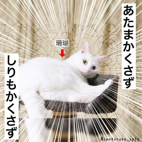 f:id:sangoruka_cats:20180724230026j:plain
