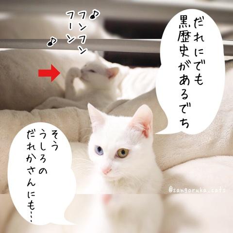 f:id:sangoruka_cats:20180731223045j:plain