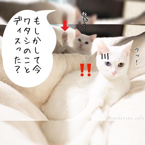 f:id:sangoruka_cats:20180731223047j:plain
