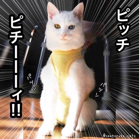 f:id:sangoruka_cats:20180731223048j:plain