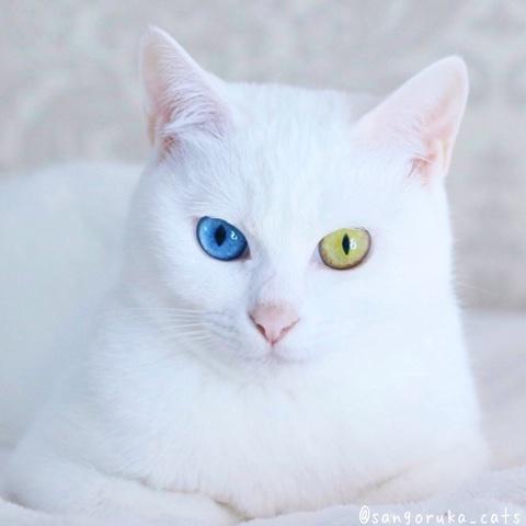 f:id:sangoruka_cats:20180803002450j:plain