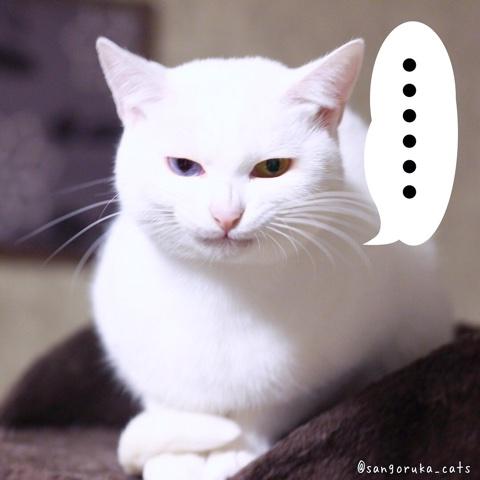 f:id:sangoruka_cats:20180803002451j:plain