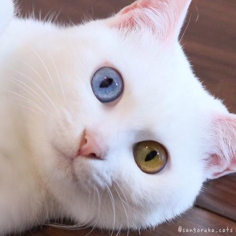 f:id:sangoruka_cats:20180806222054j:plain