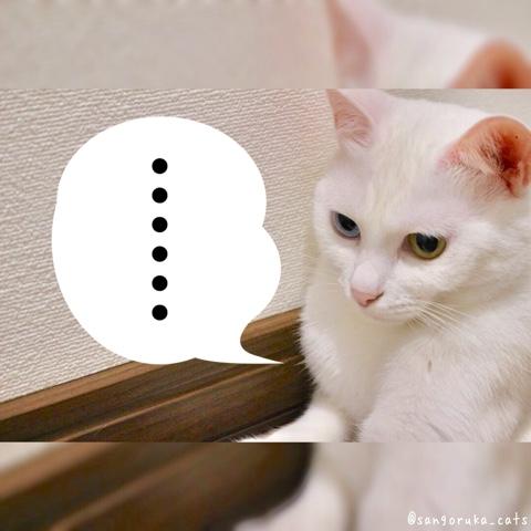 f:id:sangoruka_cats:20180806222055j:plain