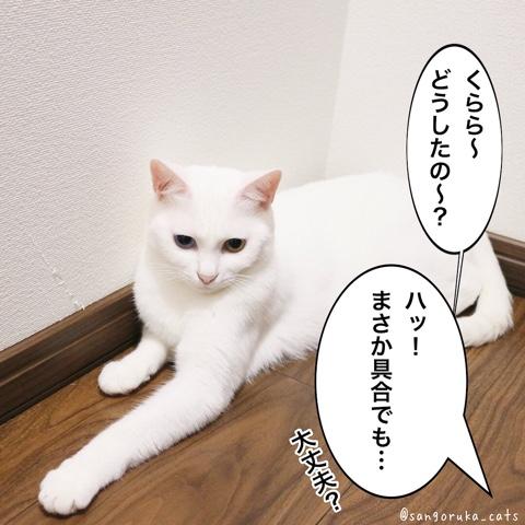 f:id:sangoruka_cats:20180806222056j:plain