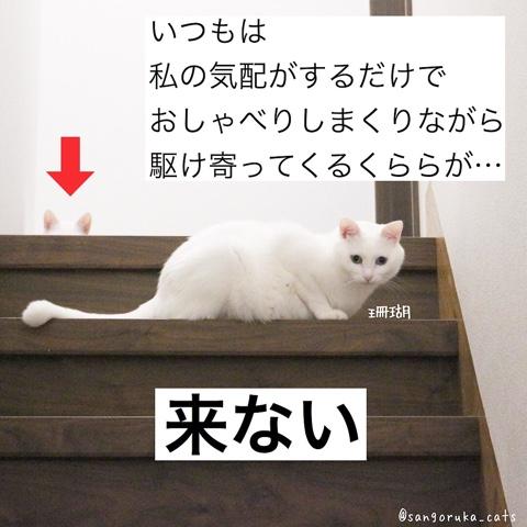 f:id:sangoruka_cats:20180806222059j:plain