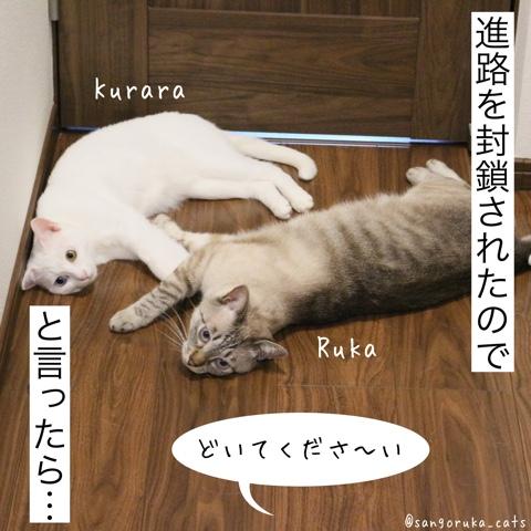 f:id:sangoruka_cats:20180812193941j:plain