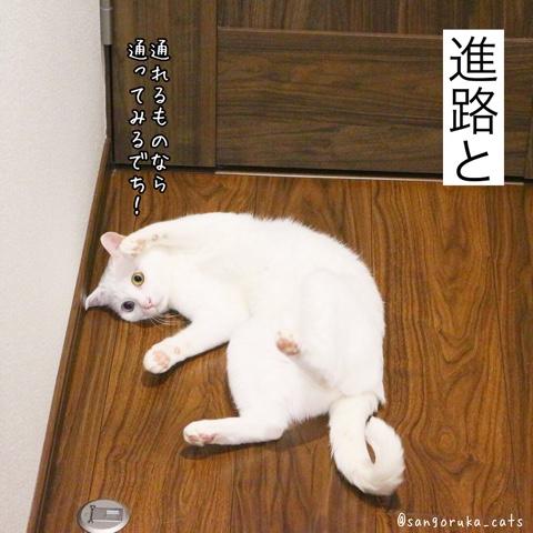 f:id:sangoruka_cats:20180812193942j:plain