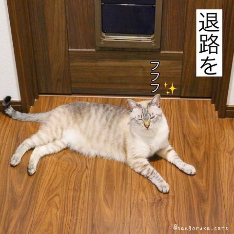 f:id:sangoruka_cats:20180812193943j:plain
