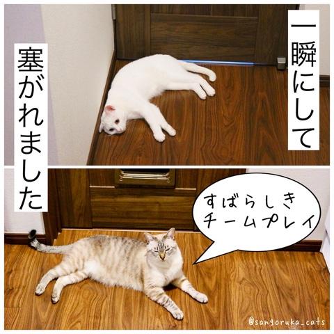 f:id:sangoruka_cats:20180812193944j:plain