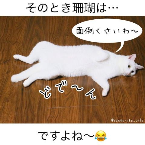 f:id:sangoruka_cats:20180812193945j:plain
