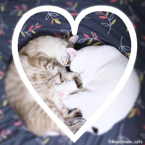 f:id:sangoruka_cats:20180812193946j:plain