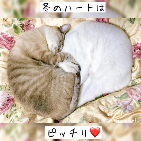 f:id:sangoruka_cats:20180812193947j:plain