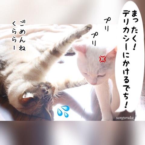 f:id:sangoruka_cats:20180812193948j:plain