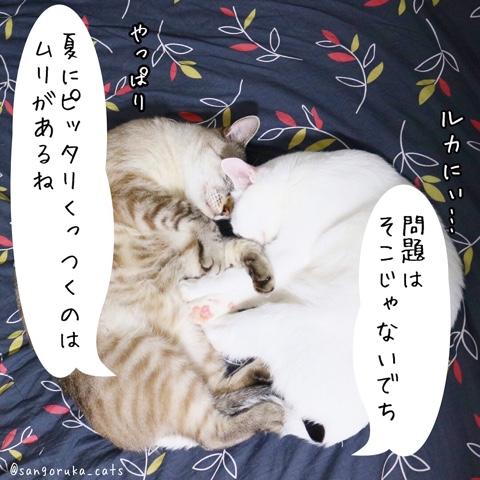 f:id:sangoruka_cats:20180812193949j:plain