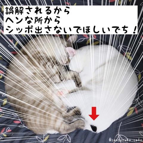 f:id:sangoruka_cats:20180813024915j:plain