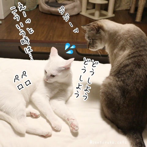f:id:sangoruka_cats:20180815001342j:plain