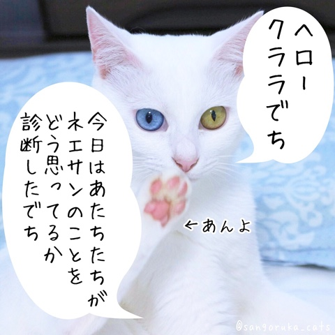 f:id:sangoruka_cats:20180818211655j:plain