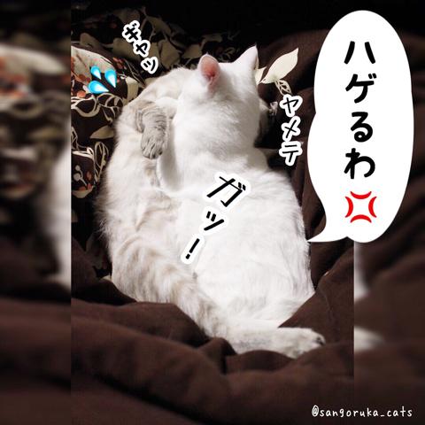 f:id:sangoruka_cats:20180821175846j:plain