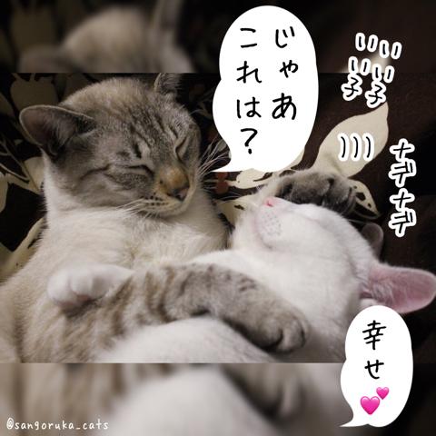 f:id:sangoruka_cats:20180821175849j:plain