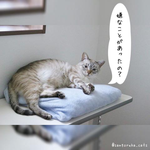 f:id:sangoruka_cats:20180827181145j:plain