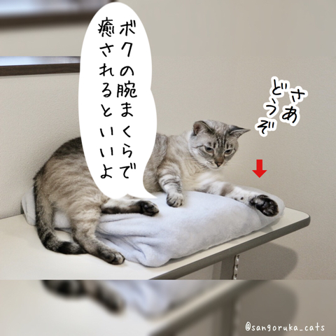 f:id:sangoruka_cats:20180827181146j:plain