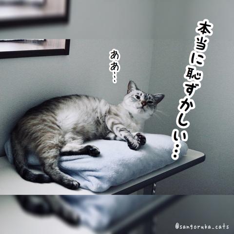 f:id:sangoruka_cats:20180827181148j:plain
