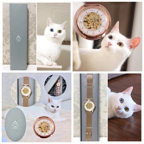 f:id:sangoruka_cats:20180827193012j:plain