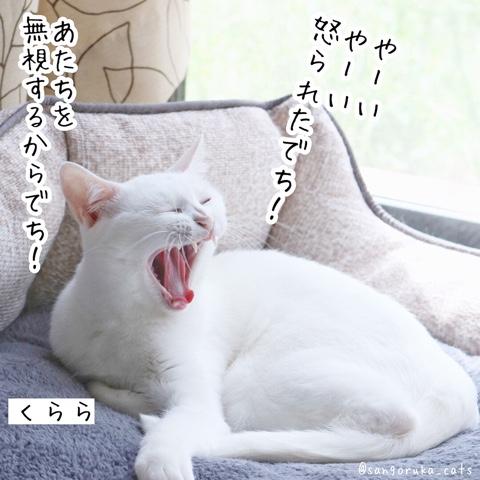 f:id:sangoruka_cats:20180831082746j:plain