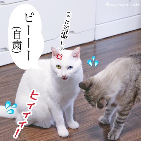 f:id:sangoruka_cats:20180831082747j:plain