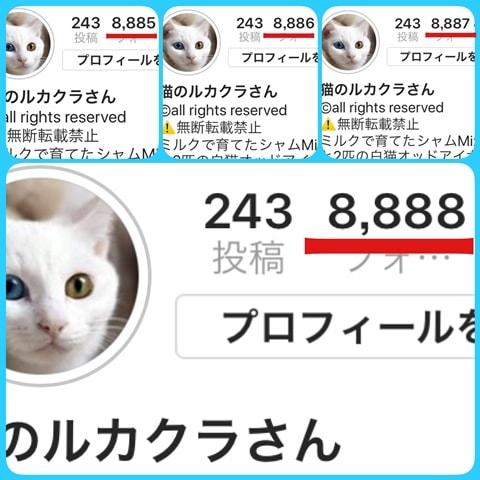 f:id:sangoruka_cats:20180831084705j:plain