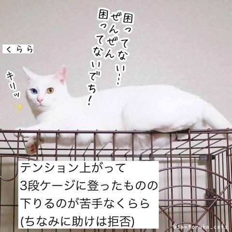 f:id:sangoruka_cats:20180911183329j:plain