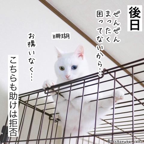 f:id:sangoruka_cats:20180911183330j:plain