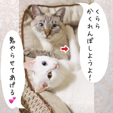 f:id:sangoruka_cats:20180921011744j:plain