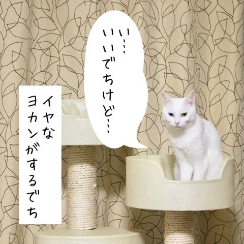 f:id:sangoruka_cats:20180921011745j:plain