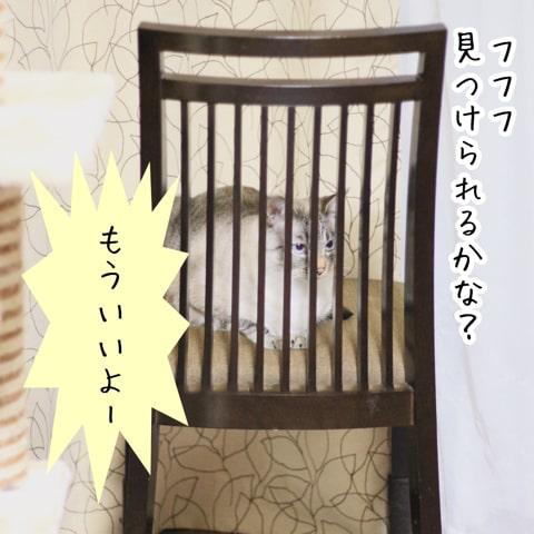 f:id:sangoruka_cats:20180921011746j:plain
