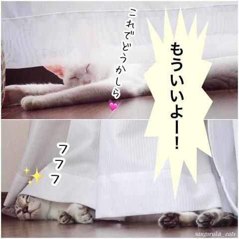 f:id:sangoruka_cats:20180921011747j:plain