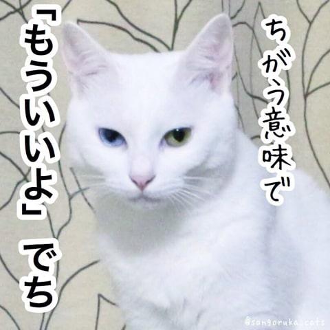f:id:sangoruka_cats:20180921011749j:plain