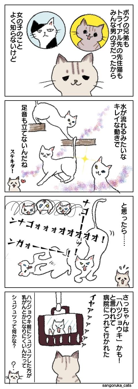 f:id:sangoruka_cats:20180924172703j:plain