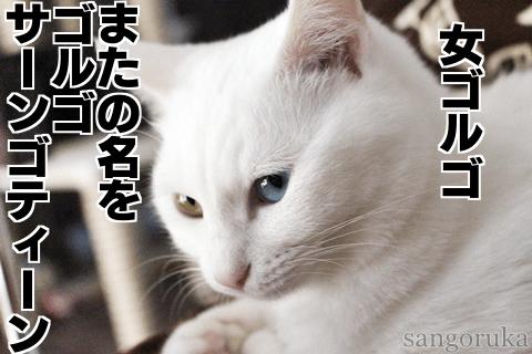 f:id:sangoruka_cats:20180924174313p:plain