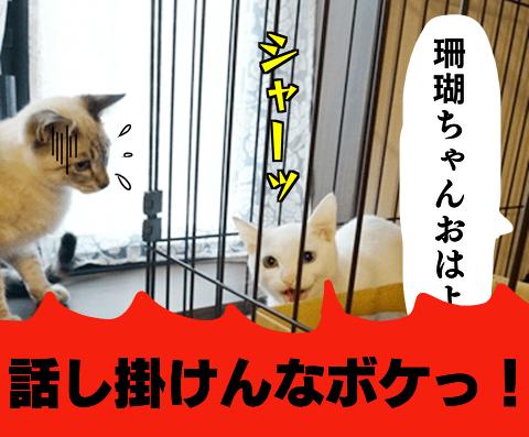 f:id:sangoruka_cats:20181010161647p:plain