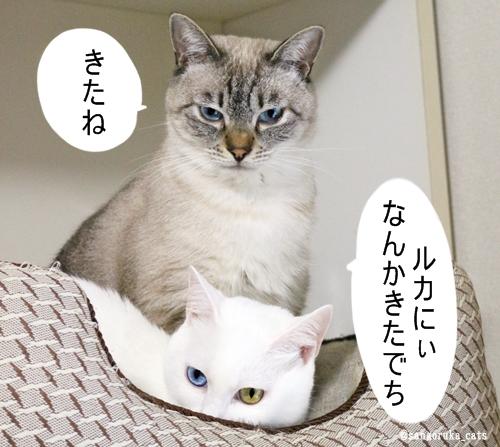 f:id:sangoruka_cats:20181013205108j:plain